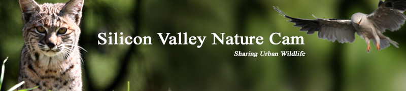 Silicon Valley Nature Cam